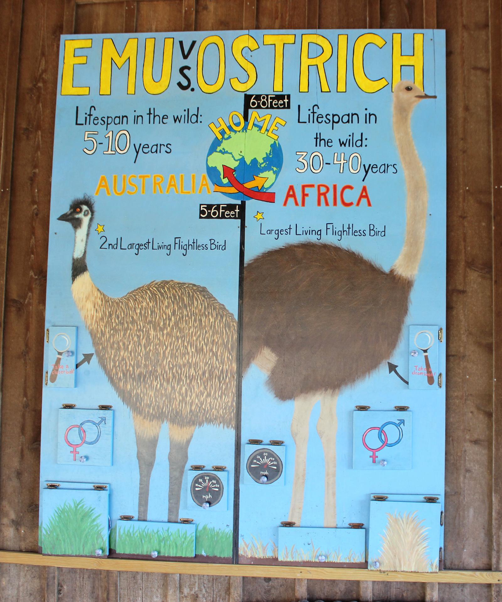 Emu vs Ostrich sign