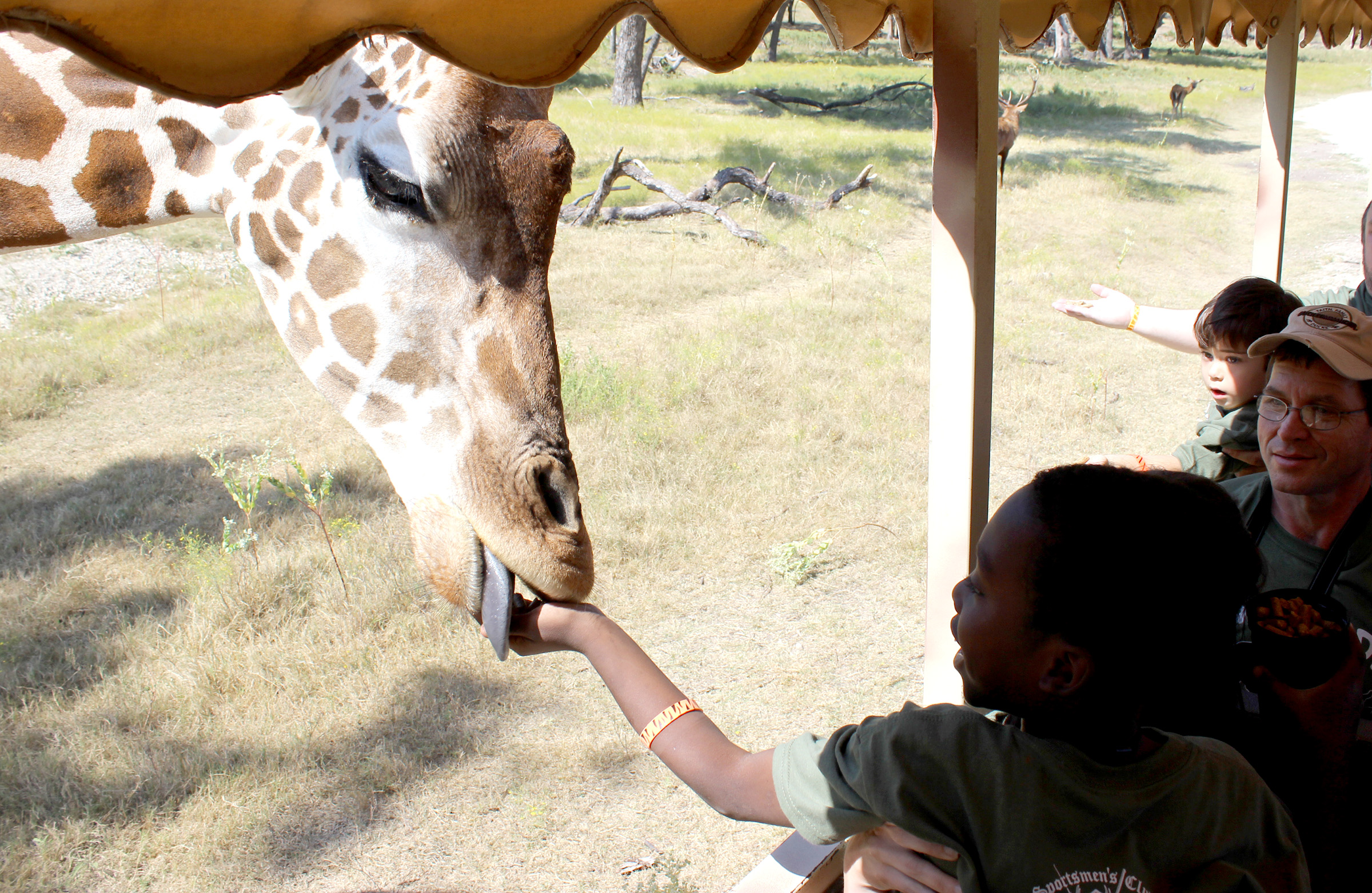 we feed giraffe