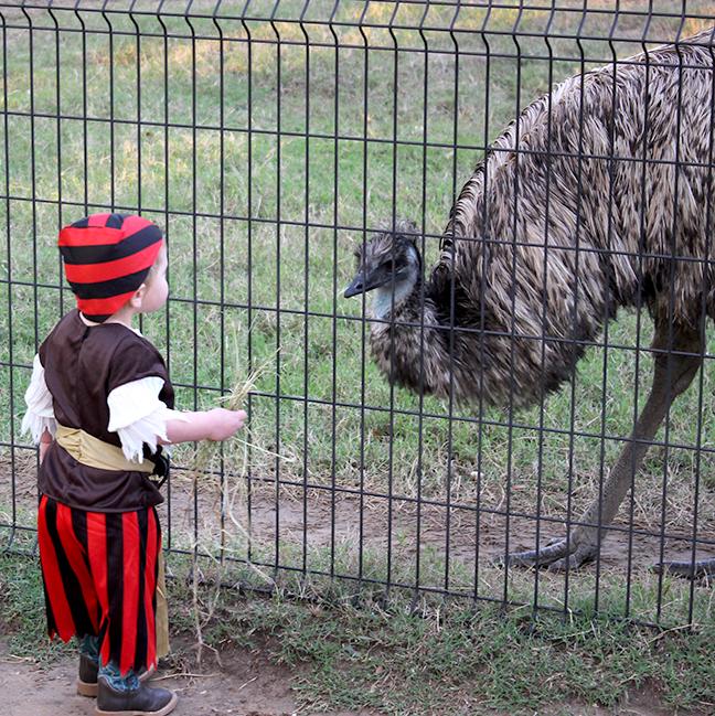 Hello Mr Emu