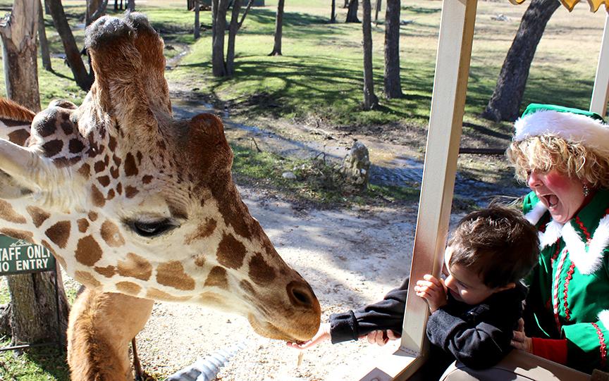 Dillinger feeds giraffe