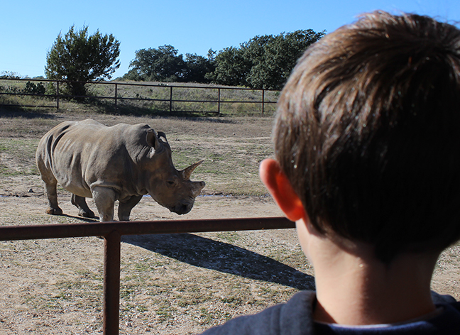 Gracelyn brother sees white rhino