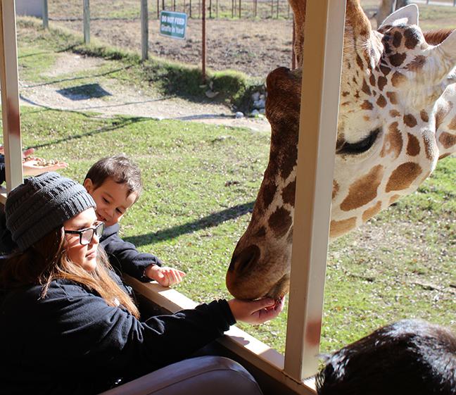 Jacey feeds giraffe