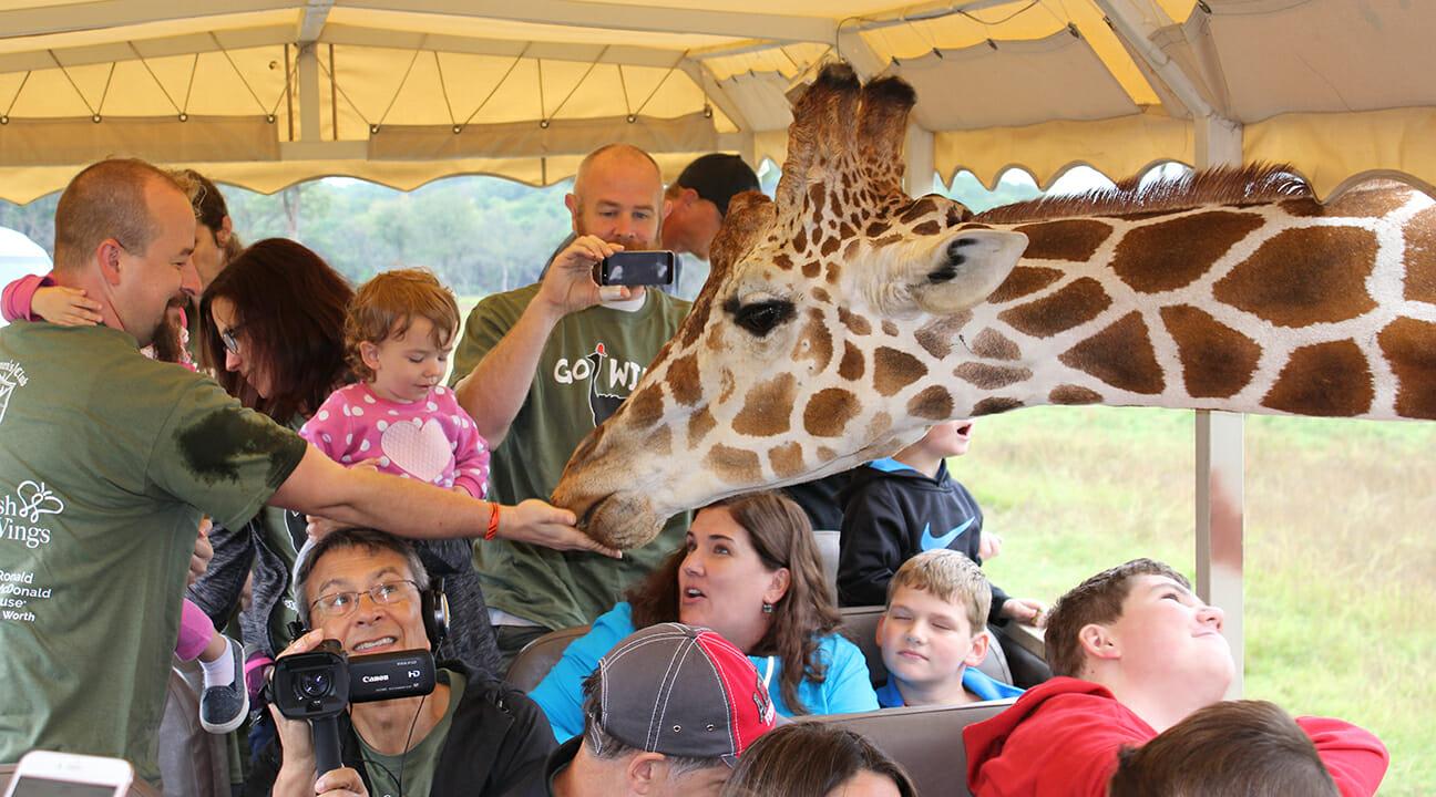 giraffe-feed-2