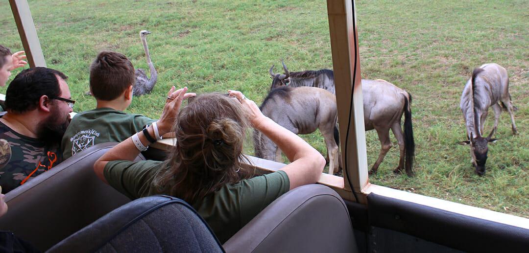 wildebeest-and-ostrich-on-tour