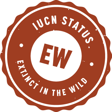 iucn_badge_extinct_in_wild
