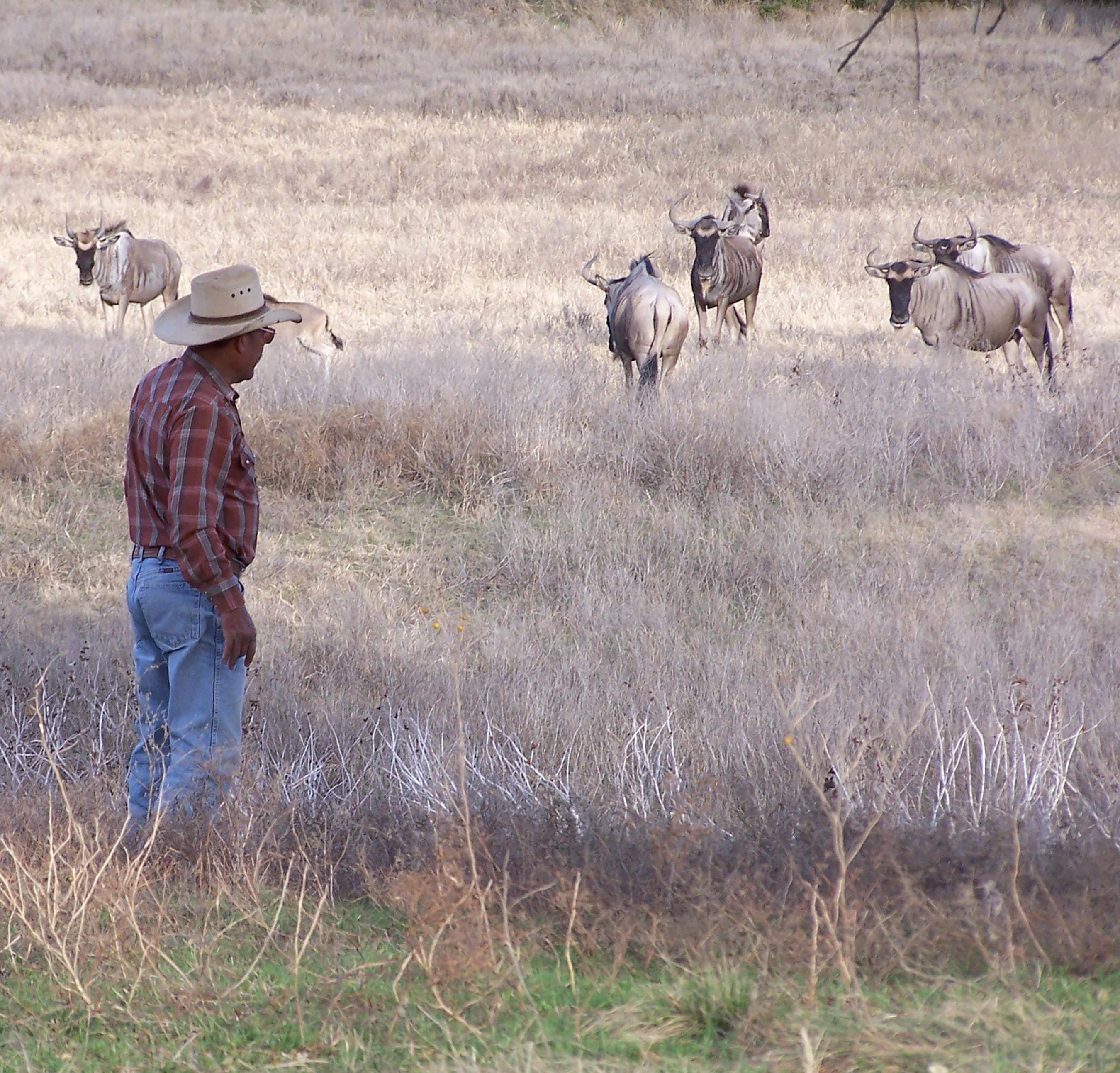 arnulfo-with-wildebeest