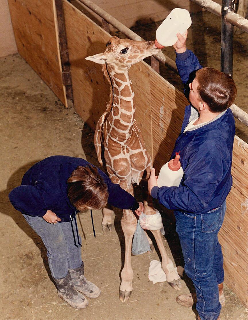 mary-jo-darryl-giraffe