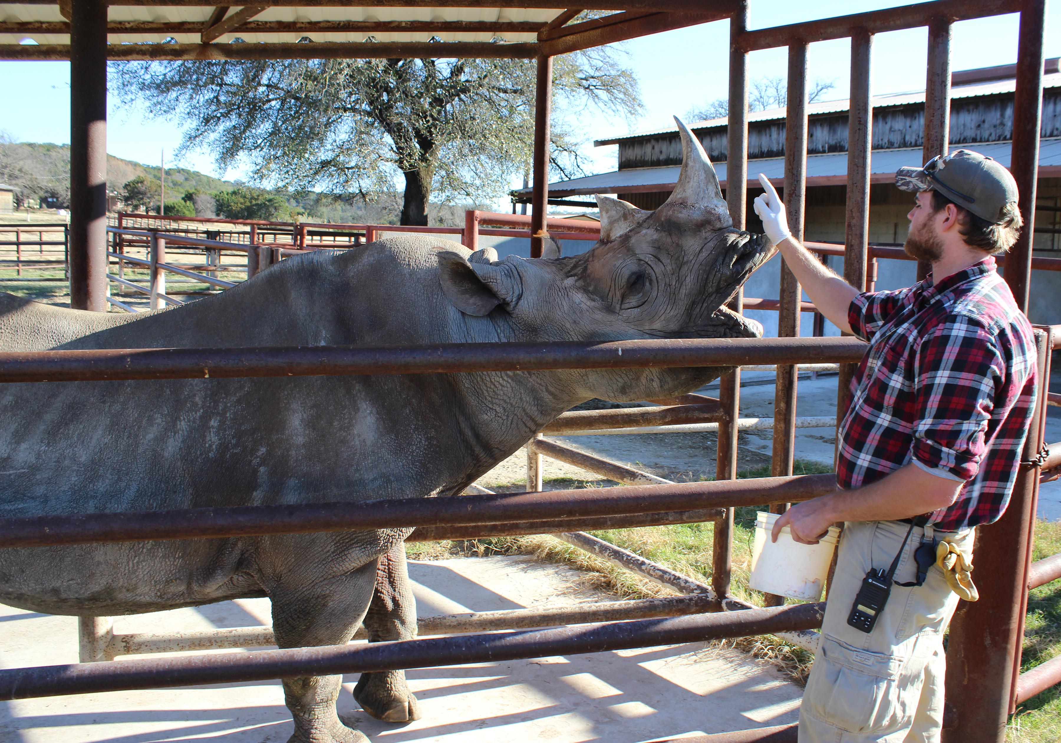 rhino-training